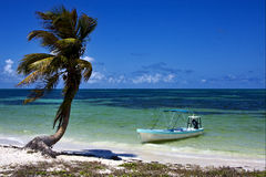 Palm in the  blue lagoon  and boat   of sian kaan in mexico Royalty Free Stock Image