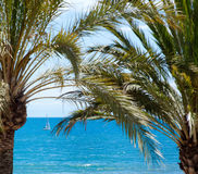 Palm and blue sea in a sunny day, Barcelona, Spain Stock Photo