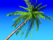 Palm and blue sky. Coconut palm tree on blue sky Royalty Free Stock Image