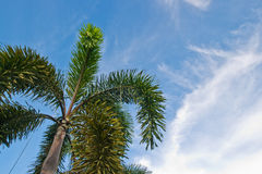 Palm and blue sky Stock Photo