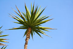 Palm and blue sky Stock Photography