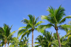 Palm on blue sky Stock Photo