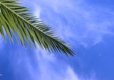 Palm and blue sky. Photo palm on the blue sky background Royalty Free Stock Photos
