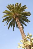 Palm on the blue sky. Palm with cactus on the blue sky stock images
