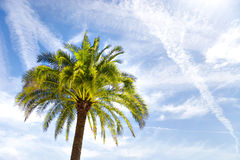 Palm on blue sky background Stock Photo