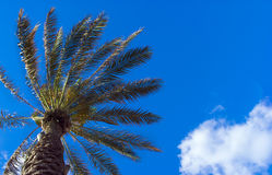 Palm on blue sky background with clouds. Relax under a palm tree on blue sky background with white clouds of air royalty free stock photography