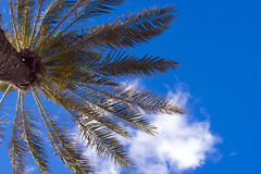 Palm on blue sky background with clouds. Relax under a palm tree on blue sky background with white clouds of air stock photo