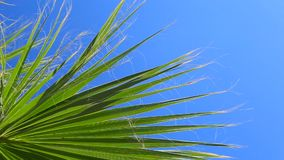 Palm on blue sky background. Driving under palm trees in Cyprus stock footage
