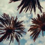 Palm and blue sky.Palm Beach fashion background Stock Photos