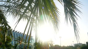 Palm blue sky summer. Swaying palm tree against the blue sky in the park stock video
