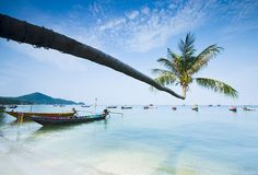 Palm and boats on tropical beach. Palm and longtail boats on tropical beach. Ko Tao island, Thailand Stock Photo