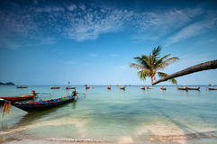 Palm and boats on tropical beach, Thailand. Palm and longtail boats on tropical beach. Ko Tao island, Thailand Stock Images