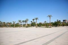 Palm-bomen op een vierkant Royalty-vrije Stock Afbeelding