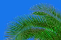 Palm-boom en hemel Royalty-vrije Stock Foto's