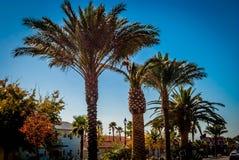 Palm Boulevard Royalty Free Stock Image