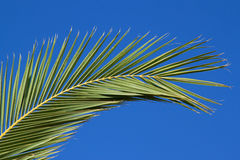 Palm branch Stock Images