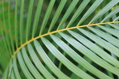 Free Palm Branch Stock Photography - 16112382