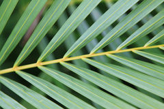 Free Palm Branch Royalty Free Stock Photos - 16112388