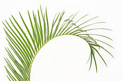 Palm branch Royalty Free Stock Photo