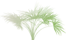 Palm branch . Stock Image
