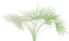 Free Palm Branch . Stock Image - 6909561