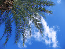 Palm branch royalty free stock image