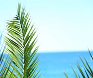 Palm branch  against the blue sea and sky Royalty Free Stock Photo