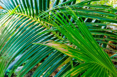 Palm branch background Stock Photos