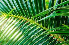 Palm branch background Stock Photo