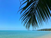 Palm branch on the background of a tropical beach stock image