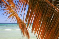 Palm branch on beach Royalty Free Stock Photos