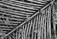 Palm branch, black and white Royalty Free Stock Photos
