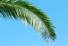 Palm branch and blue sky Royalty Free Stock Images