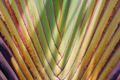Palm branch Royalty Free Stock Photos