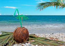 Palm branch and coconut Stock Photos