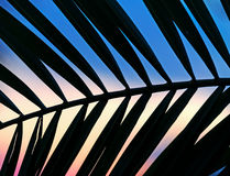 Palm branch at dusk Royalty Free Stock Photography