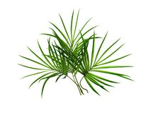 Palm branch Stock Photo