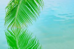 Palm branch hanging in the water stock images