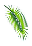 Palm branch illustration Royalty Free Stock Photos