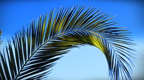 Palm Branch. In Izmir, one of Turkey`s most beautiful Stock Images