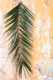 Palm branch on old vintage antique wall as Palm sunday and Easte. Palm branch on old vintage antique orange wall as Palm sunday and Easter christian holiday Stock Image