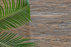 Palm branch on an old wooden background with copy space stock images