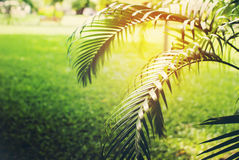 Palm Branch in Park. Natural Background Toned Brightly Stock Photo