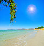 Palm branch by the sea in Sardinia Stock Photos