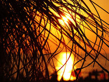 Palm branch silhouette at sunset. Stock Photo