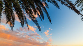 Palm branch silhouette under a cloudy sky. At sunset Stock Photography