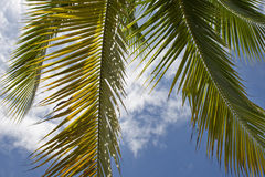 Palm branch before sky Royalty Free Stock Photos