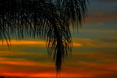 Palm branch in summer sunset Stock Image