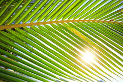 Palm branch through sun rays. Royalty Free Stock Image