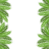 Palm branch template Stock Photo